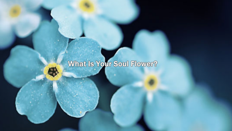 What Is Your Soul Flower?