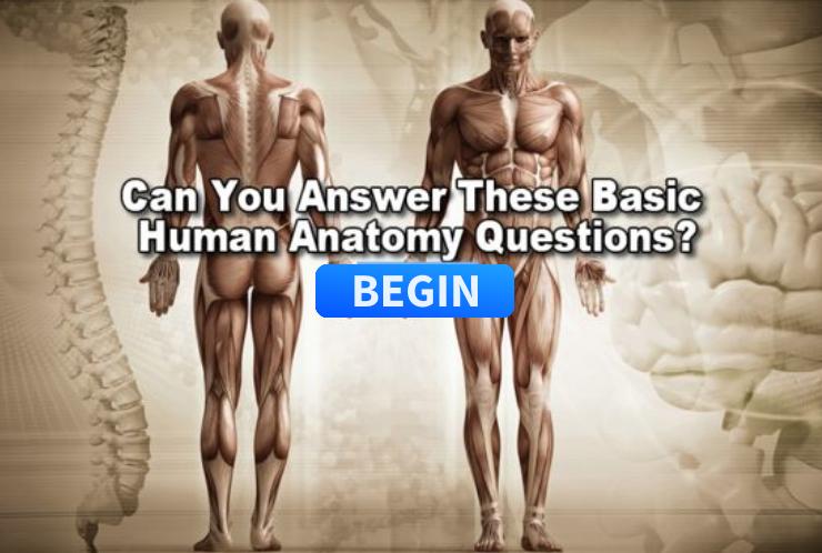 Human anatomy basics